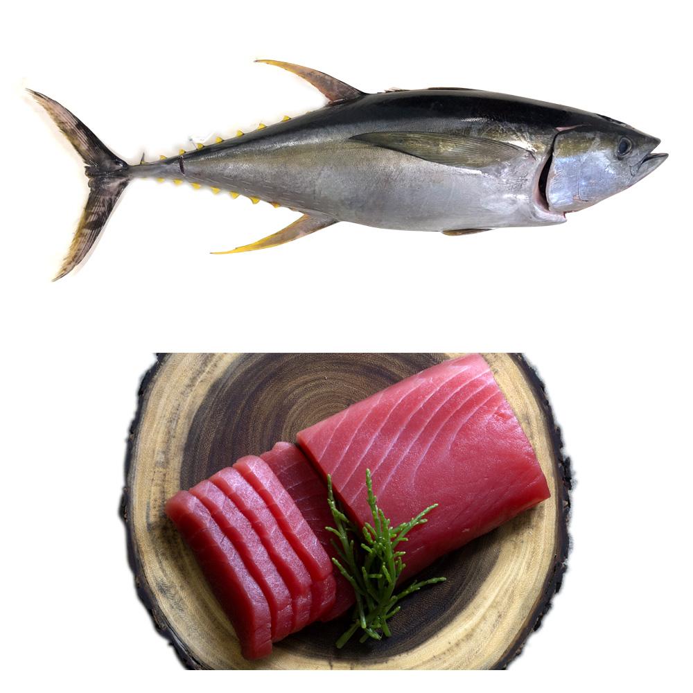 frozen yellowfin tuna